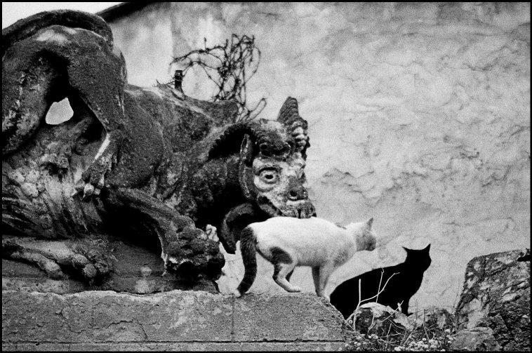 Cats, F Scianna, 1972 Sicily, Bagheria, Villa Palagonia