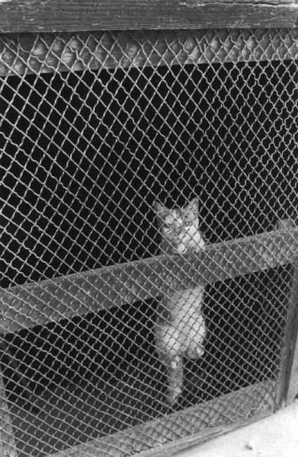 Ferdinando Scianna 1984 cat behind screen