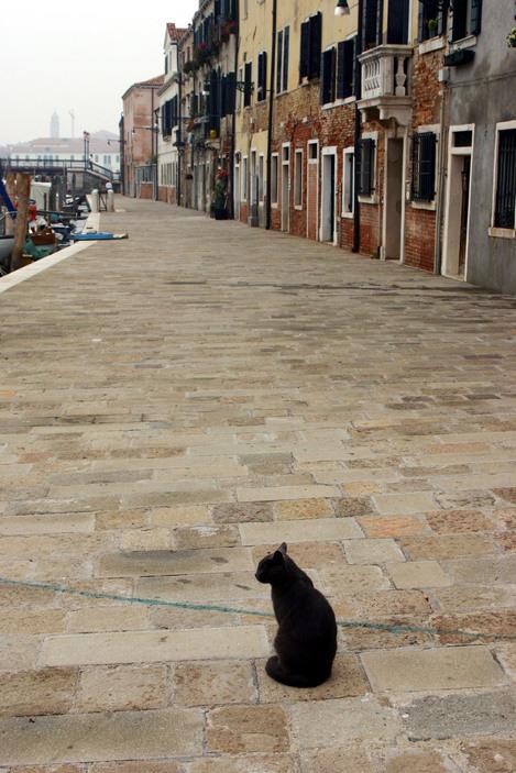 Ferdinando Scianna 2004 Black CAt