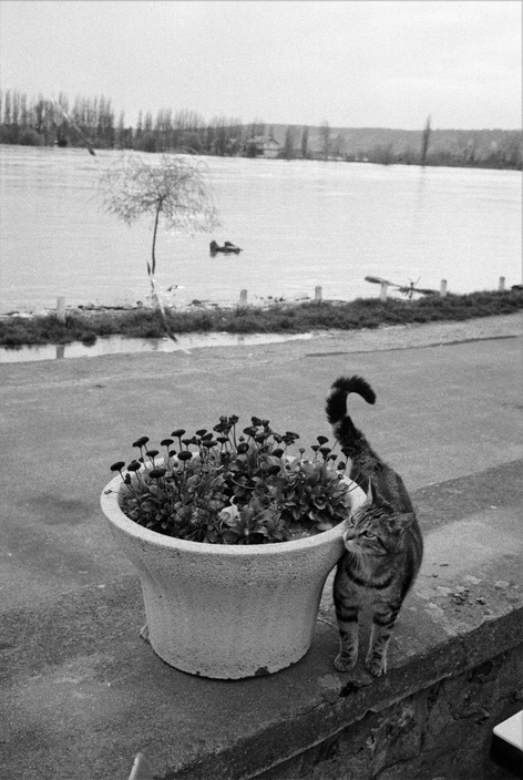 Ferdinando Scianna, Cat near the River