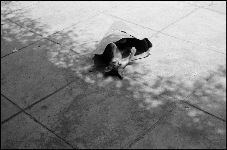 ITALY, Sicily, Bagheria, cat wrapped in a piece of paper Ferdinando Scianna