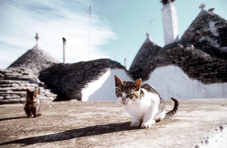 Little cats in Alberobello. 1990 Ferdinando Scianna