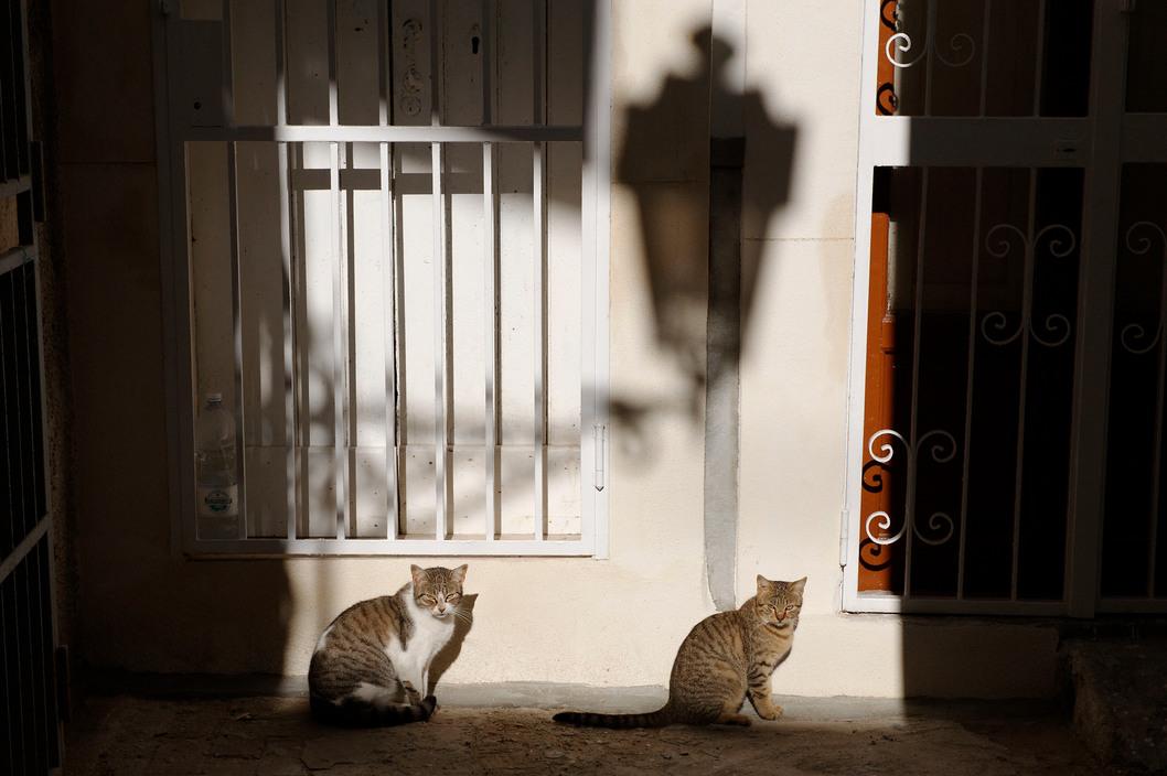 Two Cats, Ferdinando Scianna, 2009