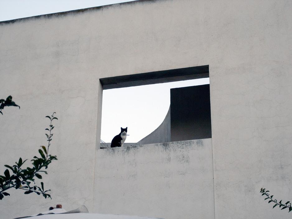 Ugo the Cat, Andalucia, Spain, 2007 Ferdinando Scianna