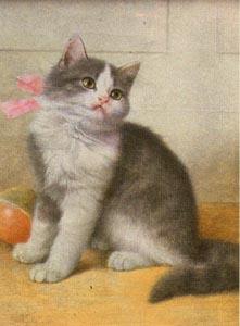 Grey and White Kitten, Wilhelm Schwar