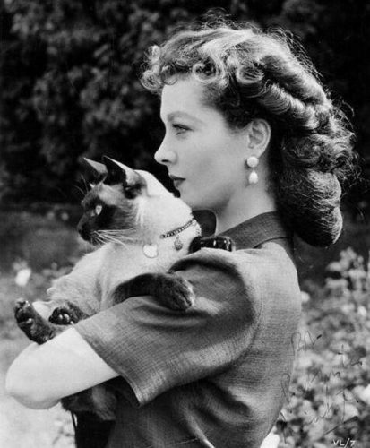 Vivian Leigh and her Siamese New Boy, famous cat lovers
