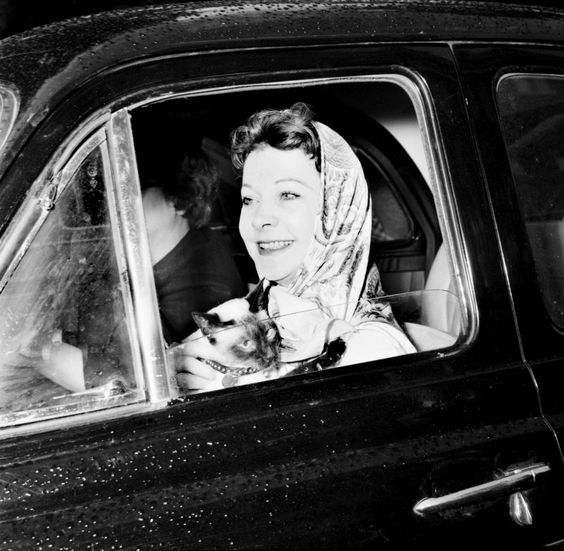 Vivian Leigh in a car with her Siamese Armando