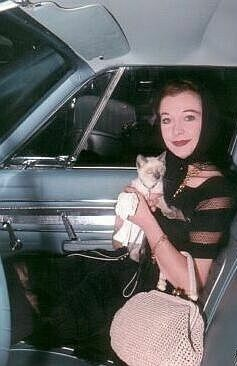 Vivian Leigh with her Siamese cat Poo Jones