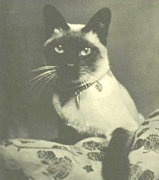 New Boy, Vivien Leigh's Siamese cat