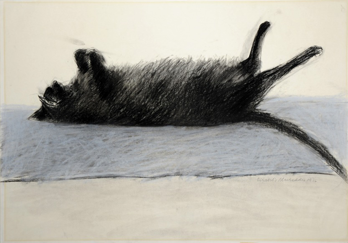 Amelia, Black Cat Sleeping, Elizabeth Blackadder
