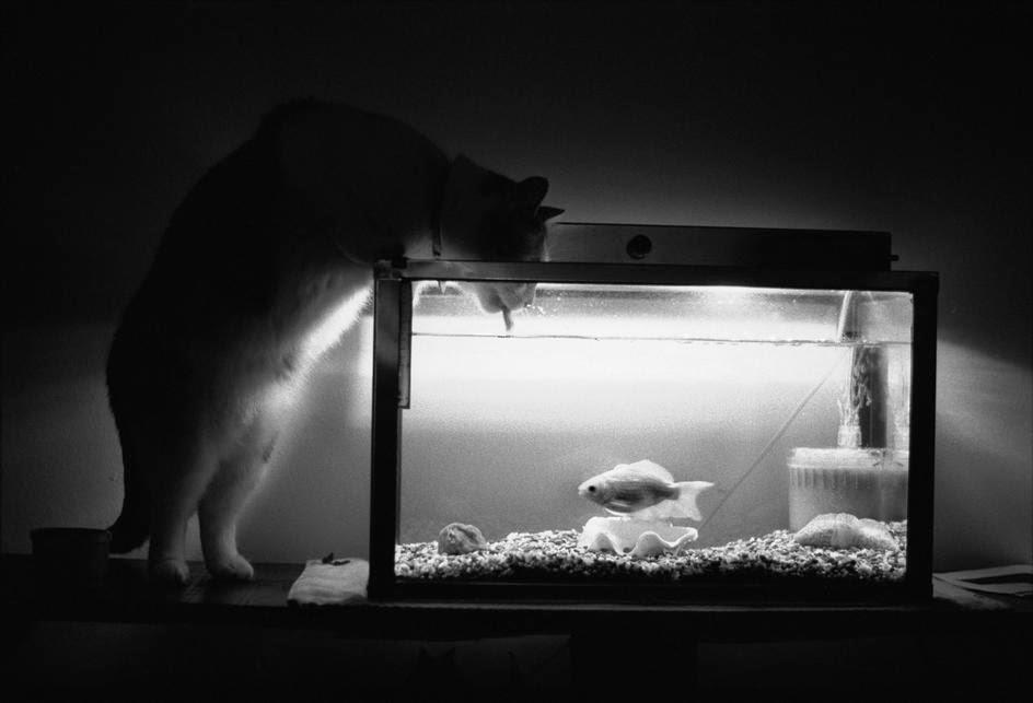 Josef Koudelka UNITED STATES, Cat, 1984