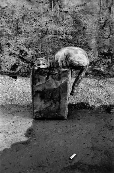 Josef Koudelka, Cat, Turkey 1984