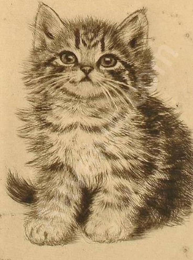 Plump Kitten, Meta Pluckebaum