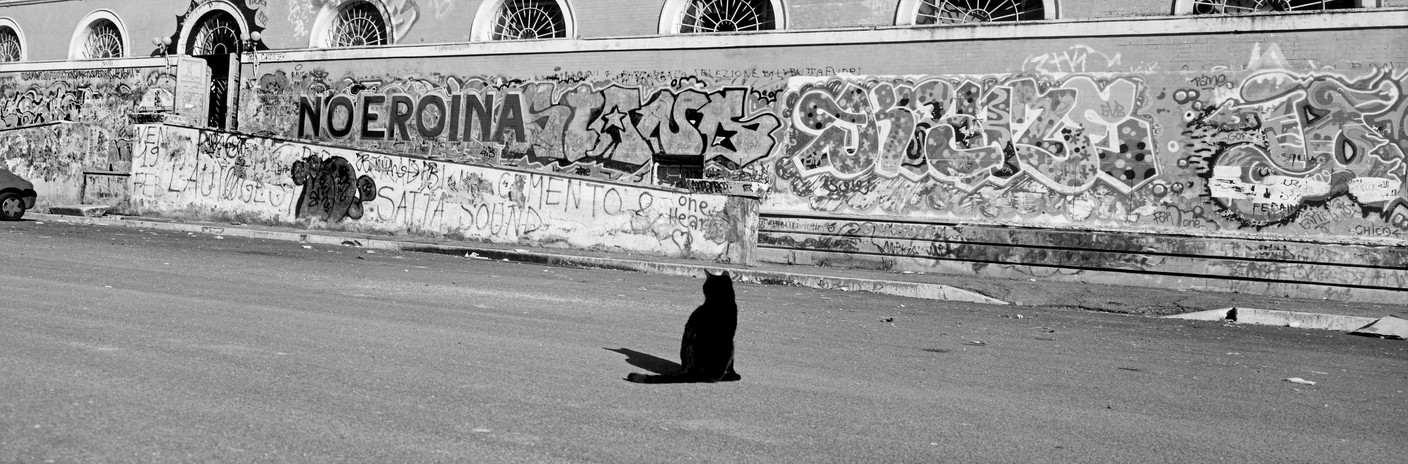 Josef Koudelka, ITALY. Rome. 1999, Cat in front of Slaughterhouse