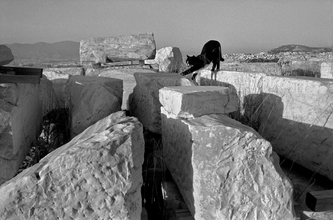 Josef Koudelka, GREECE, Athens, 2003 Cat at the Acropolis.