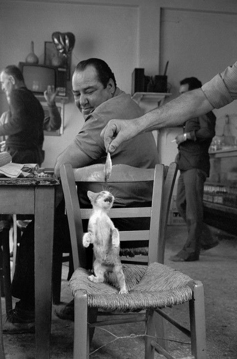 Josef Koudelka Feeding a Kitten in the Peloponnese
