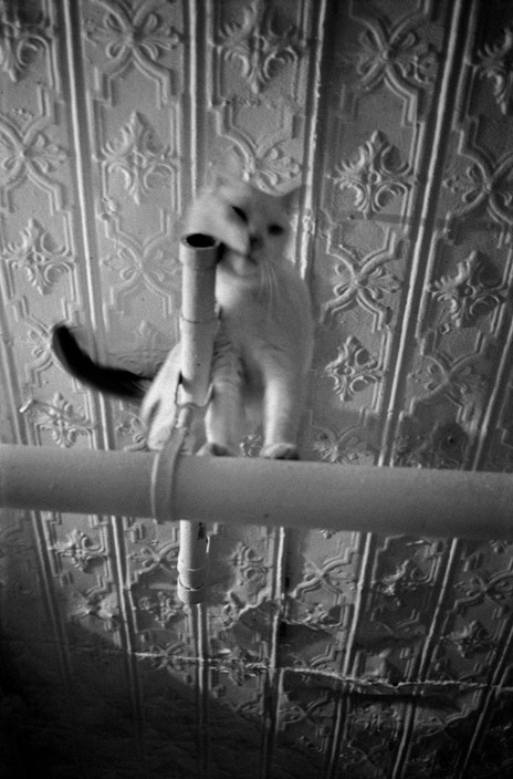 Josef Koudelka, White Cat