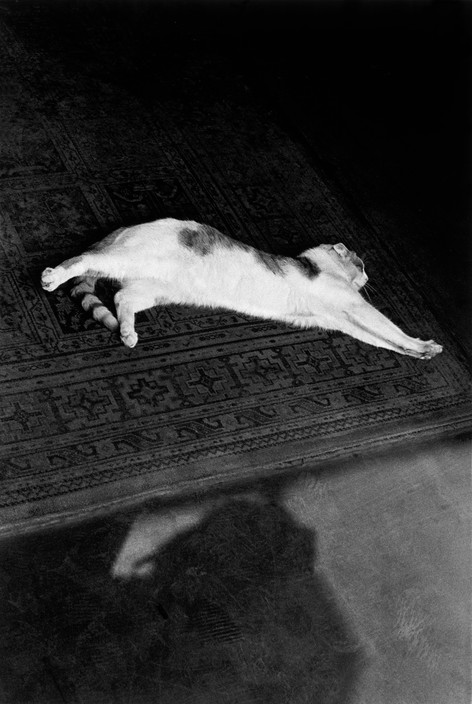 Josef Koudelka, England, 1973 Cat Lying Down