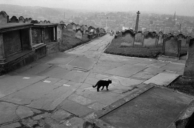 A cat in an English cemetery, 1978, Josef Koudelka