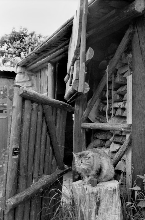Cat Bohemian of the south. Village of Mariz. Stable of Isabelle Farova's home, Martine Franck