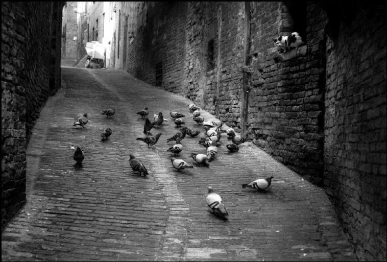 Cat Hunting Pigeons, Tuscany, 1984 Martine Franck