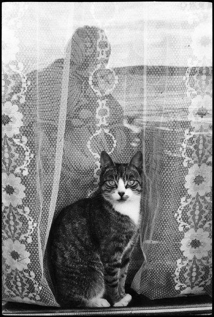 Cat in a Window, Martine Franck