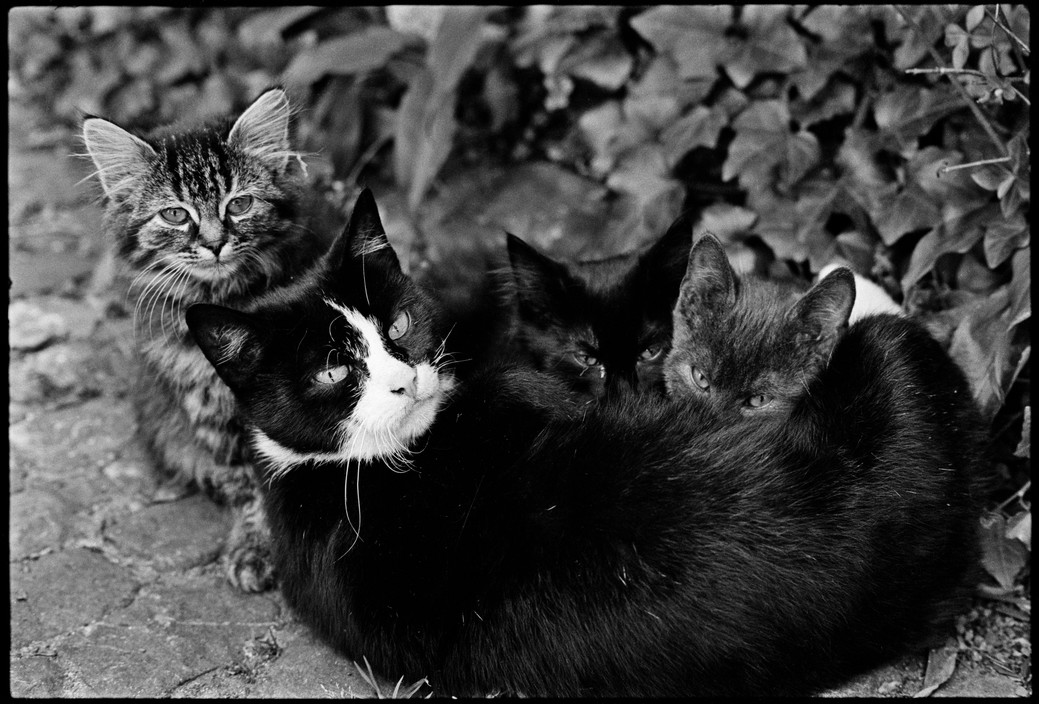 Mother Cat and Three Kittens, Martine Franck