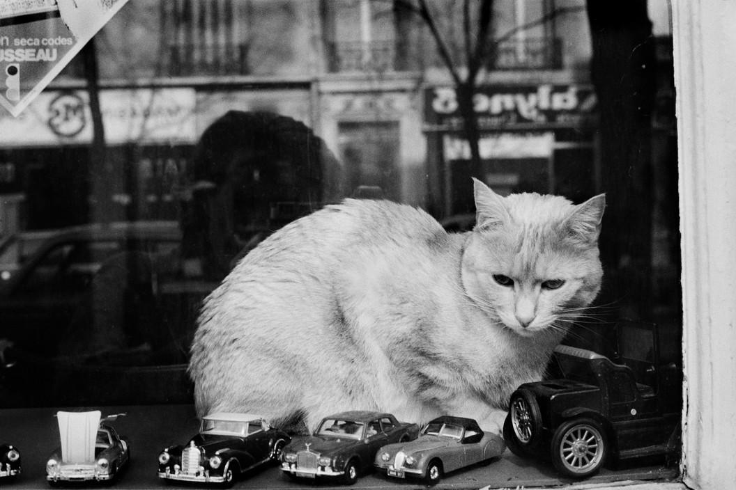White Cat, Quartier du Père Lachaise, Paris Martine Franck