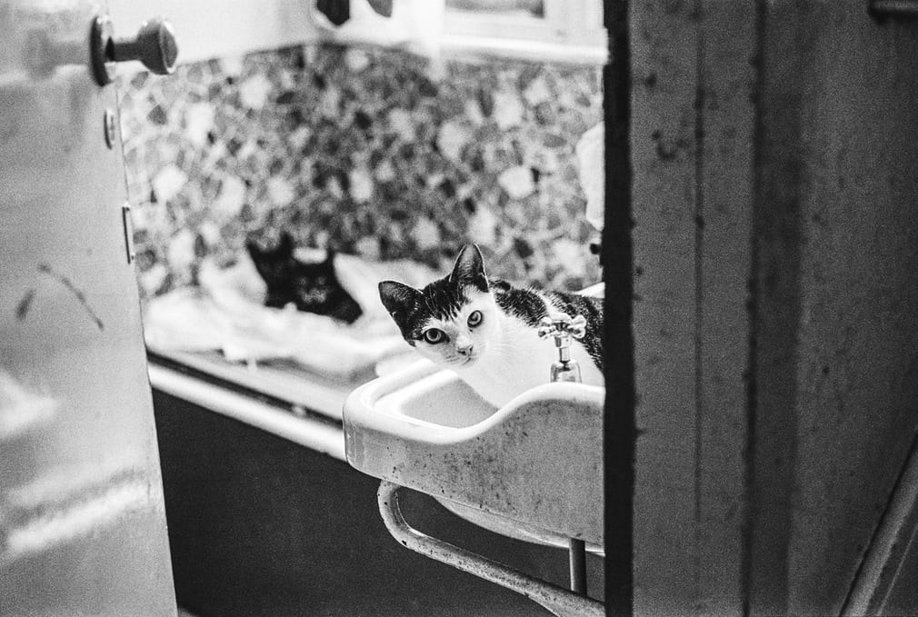 Cat Action Trust, London, 1980 Jane Bown