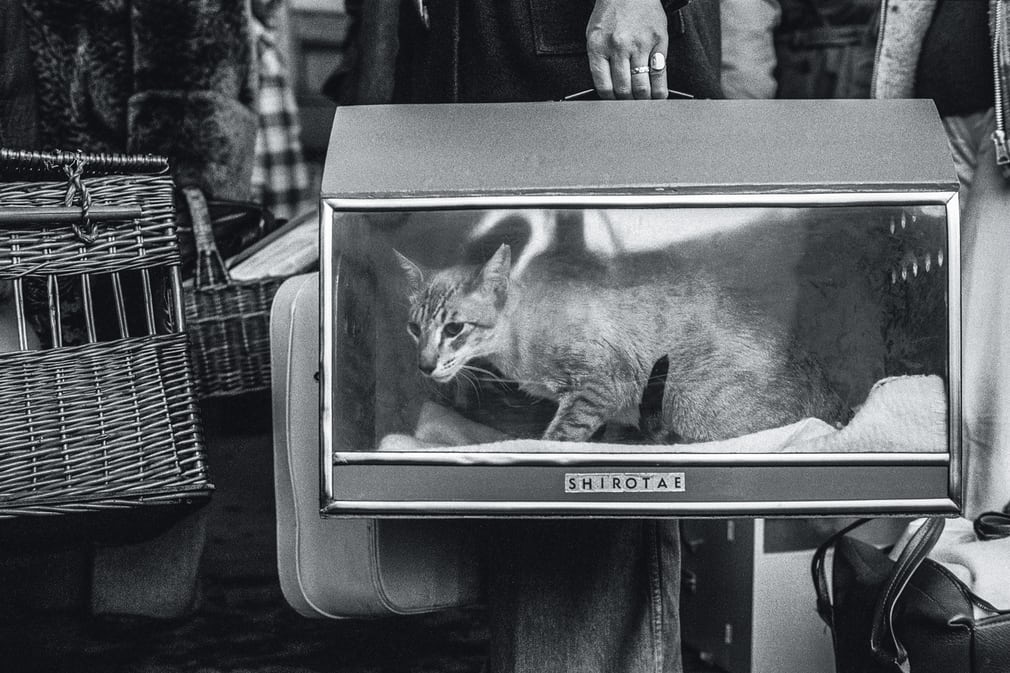 Cat show, Olympia, 1976, Jane Bown