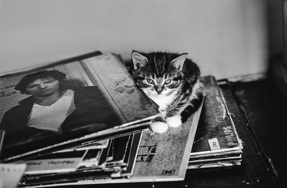 David Knopfler's Kitten, 1979, Jane Bown