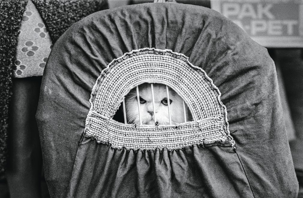 Show cat in travelling basket, National Cat Club Show, 1976, Jane Bown