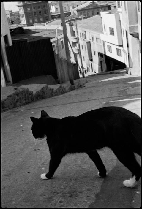 Chile 1992, Tuxedo Cat, Sergio Larrain