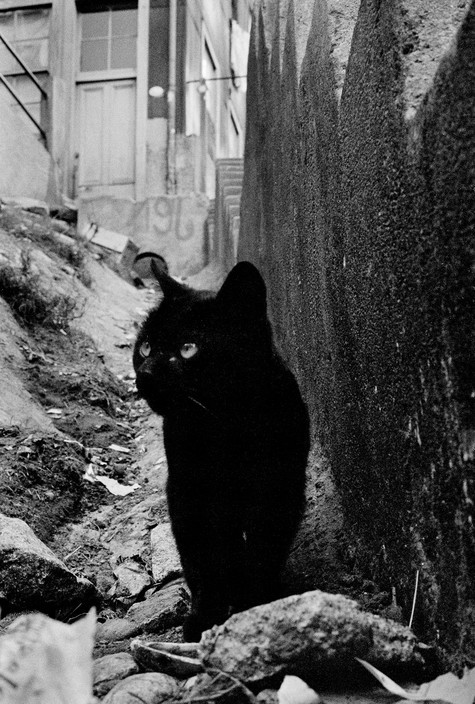 Sergio Larrain Valparaiso, Chile, 1963, black cat